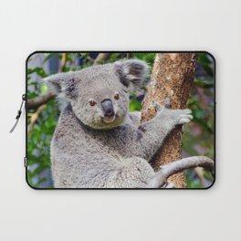 Australian Koala Bear Photo Laptop Sleeve