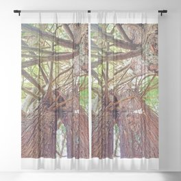 AllenbyArt Intertwined Redwoods Landscape Scenery, Scenery of Gorgeous Trees, Photography,  Sheer Curtain