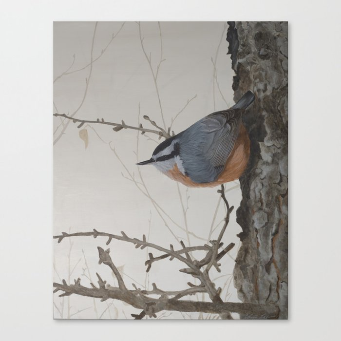 Red-breasted Nuthatch at Yellowknife River Canvas Art Print by ShawnaLampiLegaree - SMALL (s6-11900146p16a6v28) photo