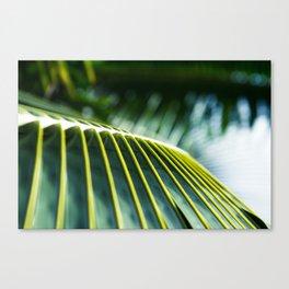 Palm Tree Maui Hawaii Canvas Print