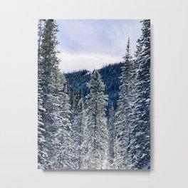 Evergreen Snow Scene Metal Print