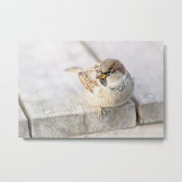 Sparrow - After The Transatlantic Metal Print