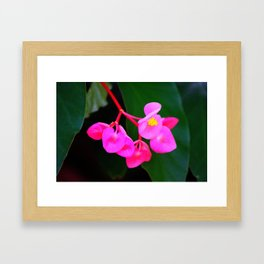 Bold Flower Framed Art Print