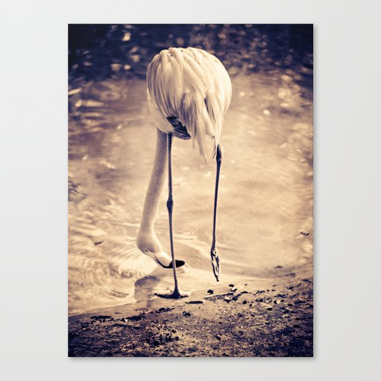 White Flamingo Canvas Print