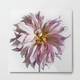 Dahlia Flower #1 Metal Print