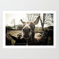 donkey Art Prints featuring Donkey by monsieur m