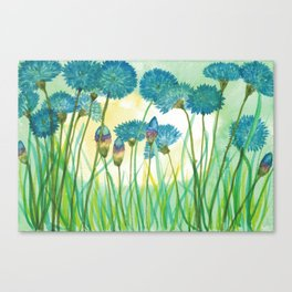 May your cornflowers never fade Canvas Print