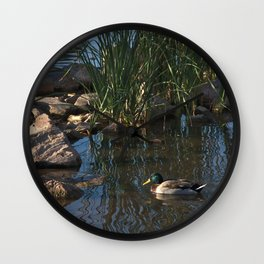 The Duck Between The Reeds And Rocks Wall Clock