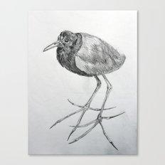 Rara avis Canvas Print