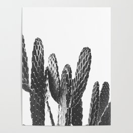 Cactus Photography Print {4 of 4} | B&W Succulent Plant Nature Western Desert Design Decor Poster