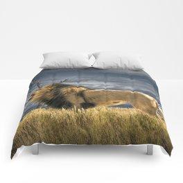 Roaring African Lion Comforters
