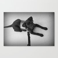 puppy Canvas Prints featuring Puppy by BeccaLovexoxo