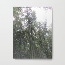 Ombre in the Morning Light Metal Print