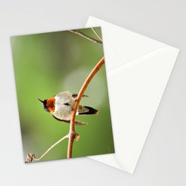 Hummingbird XVII Stationery Cards