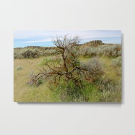 Crab Creek Tree Metal Print