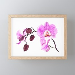pink orchid flower watercolor painting Framed Mini Art Print