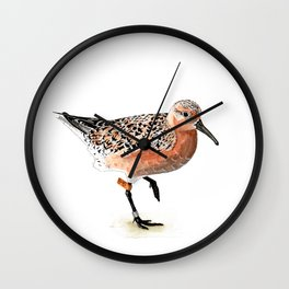 Red Knot B95 Wall Clock