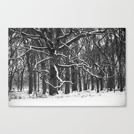 Tree in the winter (RR 272) Canvas Print