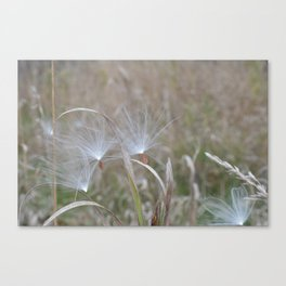 Make A Wish And Fly Away Canvas Print