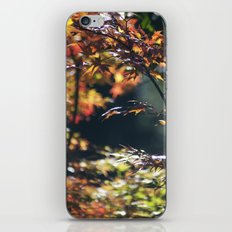 Autumn Window iPhone & iPod Skin