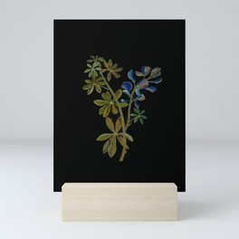 Lupinus Varius Mary Delany Delicate Paper Flower Collage Black Background Floral Botanical Mini Art Print