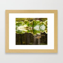 Lily Pad Photography Print Framed Art Print