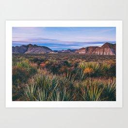 Cactus in the Desert Fine Art Print  • Travel Photography • Wall Art Art Print