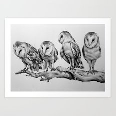 Barn Owls Art Print