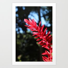 AWAPUHI - Red Ginger Art Print