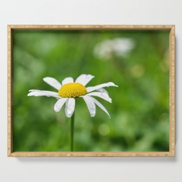 White daisy flower with dewdrop Serving Tray