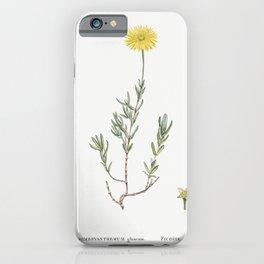 Mesembryanthemum Glaucum (Noon Flowers) from Histoire des Plantes Grasses (1799) by Pierre-Joseph Re iPhone Case