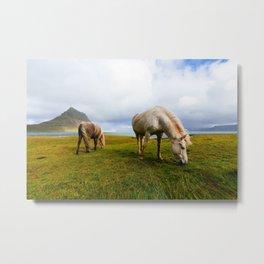 Icelandic Horses II Metal Print
