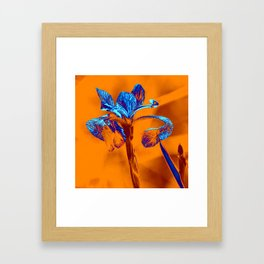 Glowing Iris... Framed Art Print
