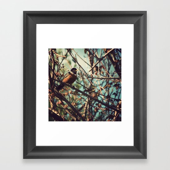 North American Robin Framed Art Print