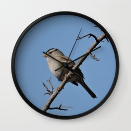 A White-Crowned Sparrow Eyes the Botanic Garden Wall Clock