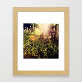 Grass 2 Framed Art Print