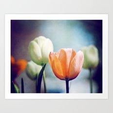 Orange Tulip Navy Blue Flower Photography, Coral Peach Floral Nature Art Print