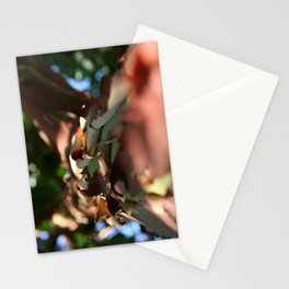 Exfoliating Stationery Cards