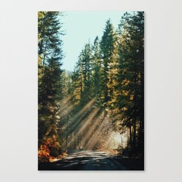 Filtered Canvas Print