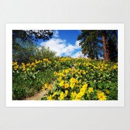 hillside of Balsam Root flowers Art Print