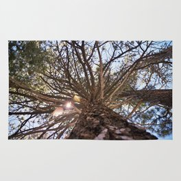Never Stop Looking Up (Tree 1) Rug