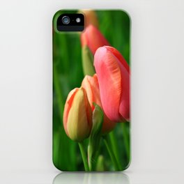 Romantic Tulips of Keukenhof iPhone Case