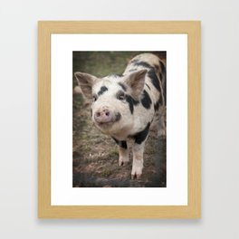 Kune Kune Piggy Framed Art Print