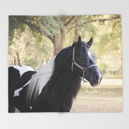 Stunning Gypsy Vanner in Color Throw Blanket