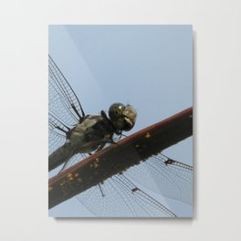 Lunch time Metal Print