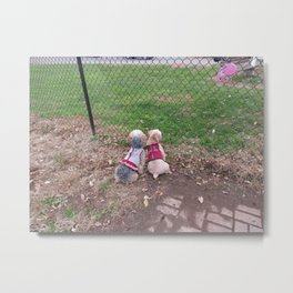 Penny and Copper waiting for Daddy Metal Print