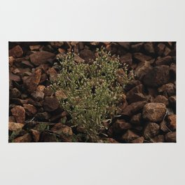 Green plant on the gray stones, grow on the stones Rug