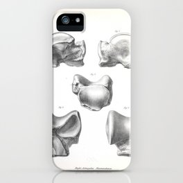 The Zoology of the Voyage of H.M.S. Beagle 1840 - Fossil Mammalia - Macrauchenia Astragalus iPhone Case