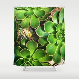3 Succulents Shower Curtain