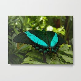 Emerald Swallowtail Butterfly Metal Print
